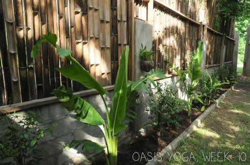 Oasis Yoga - week 10